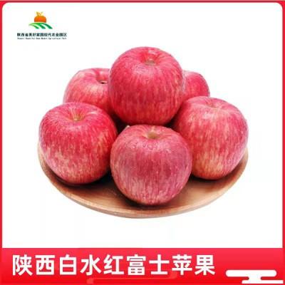 陕西白水红富士苹果