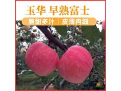 陕西白水早熟苹果玉华富士苹果水果礼盒
