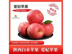 陕西白水爱妃苹果新鲜水果礼盒