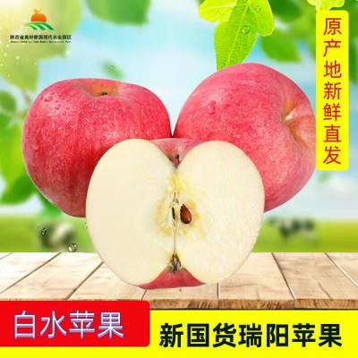 陕西白水苹果新国货瑞阳苹果水果礼盒